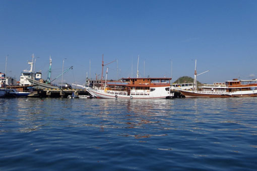 The Complete Guide to Komodo Tours - Tripfuser Travel Blog - Hand