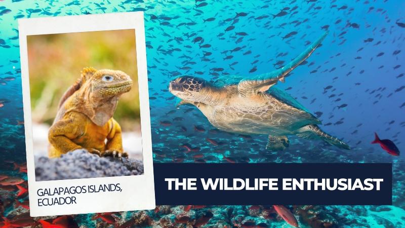 wildlife enthusiast type of traveller