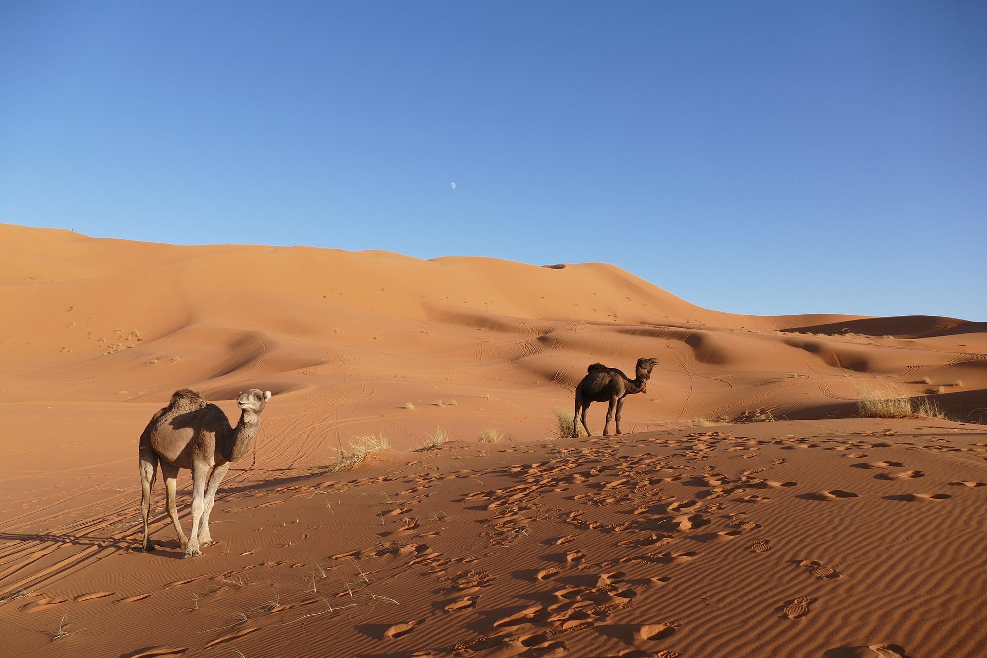 morocco Camel desert tours