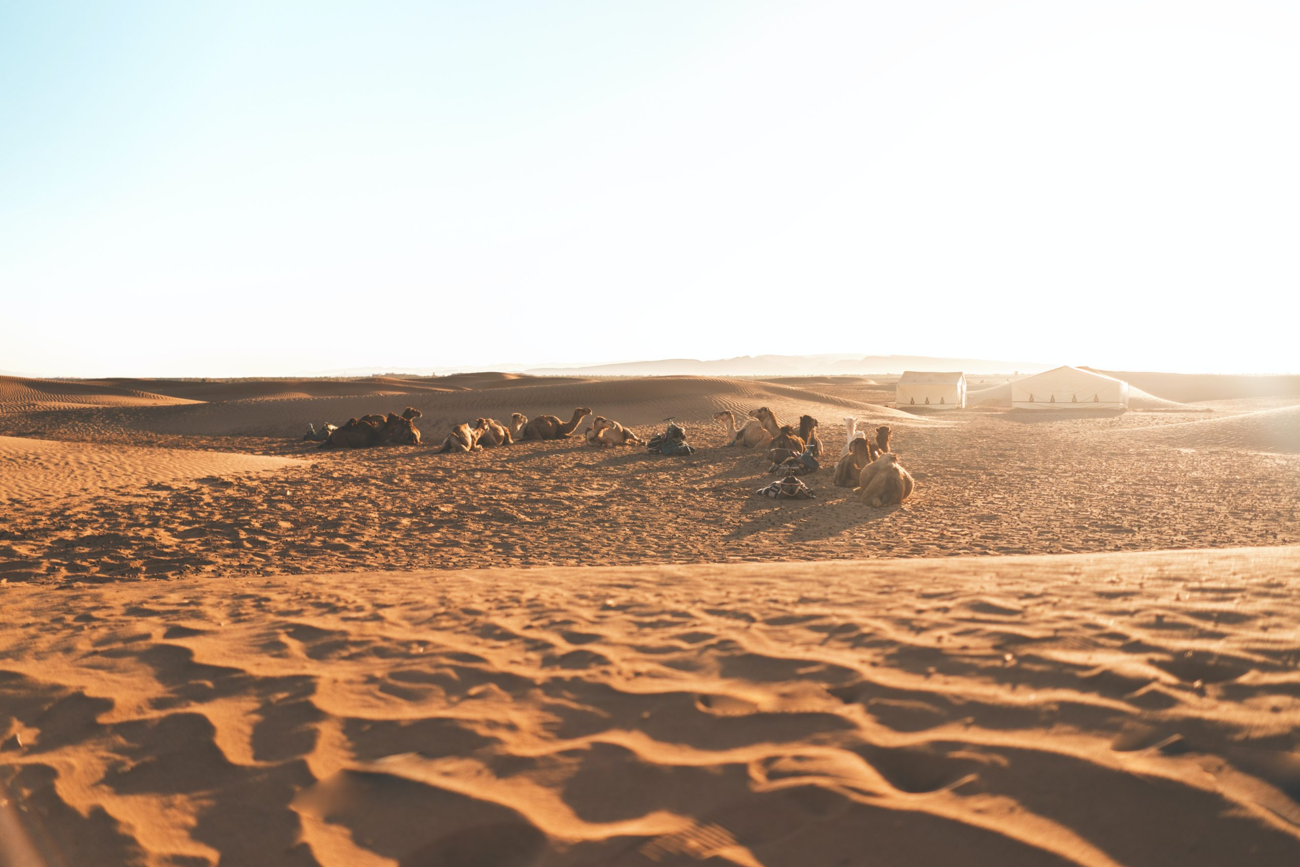 camel ride desert tour