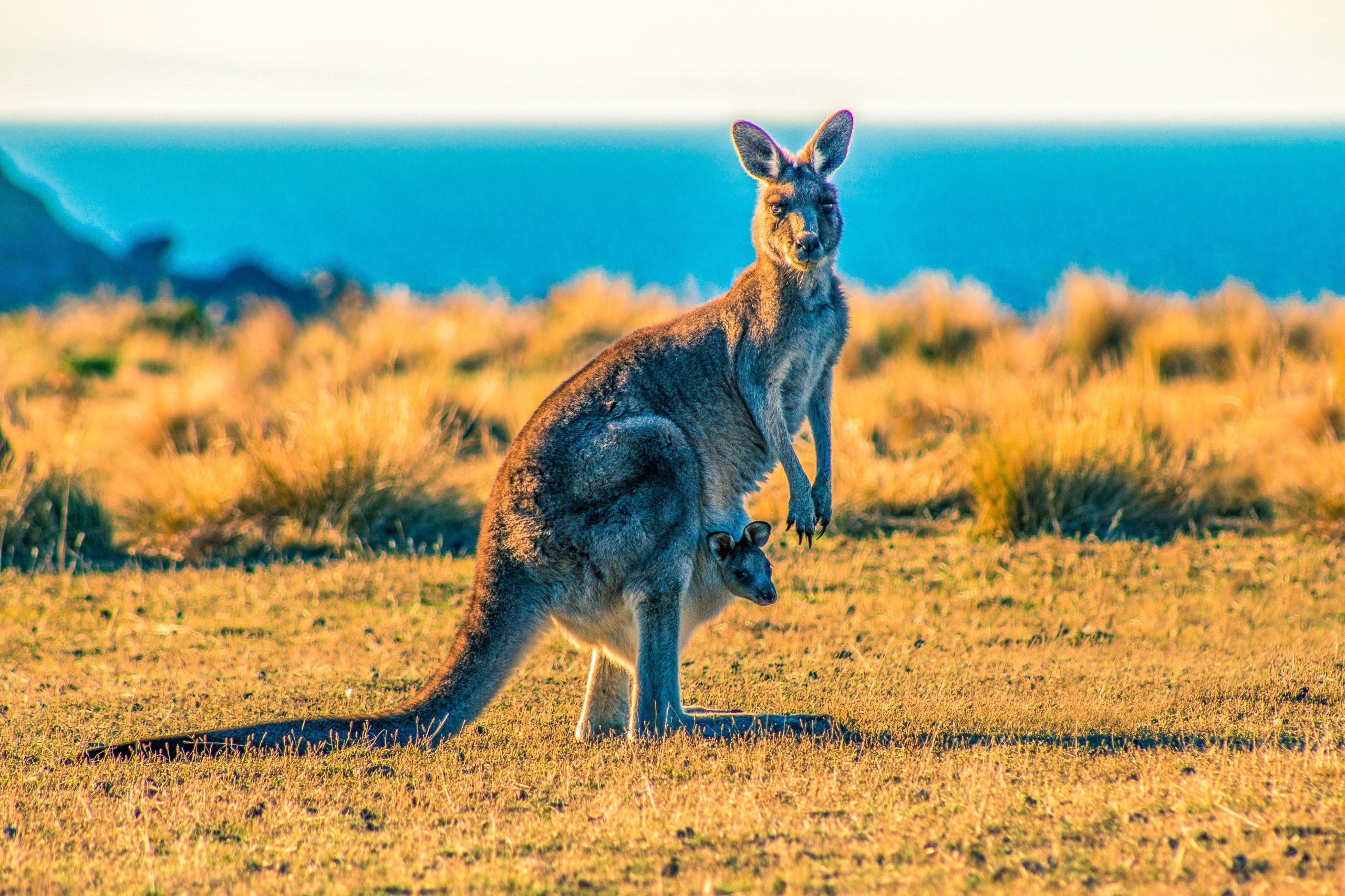 Australia trip Kangaroo Island