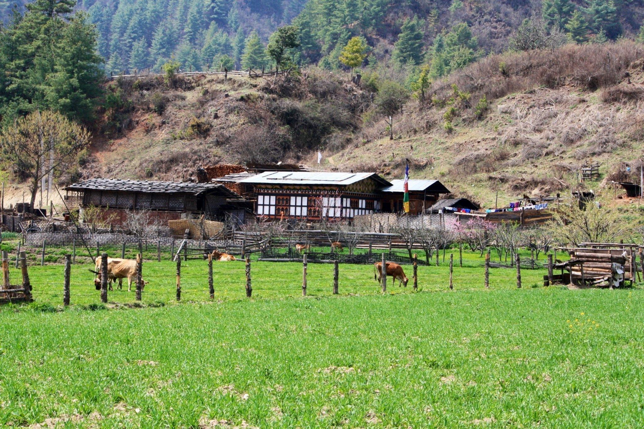 6-Day Scenic Bhutan Tour - Bhutan Itinerary