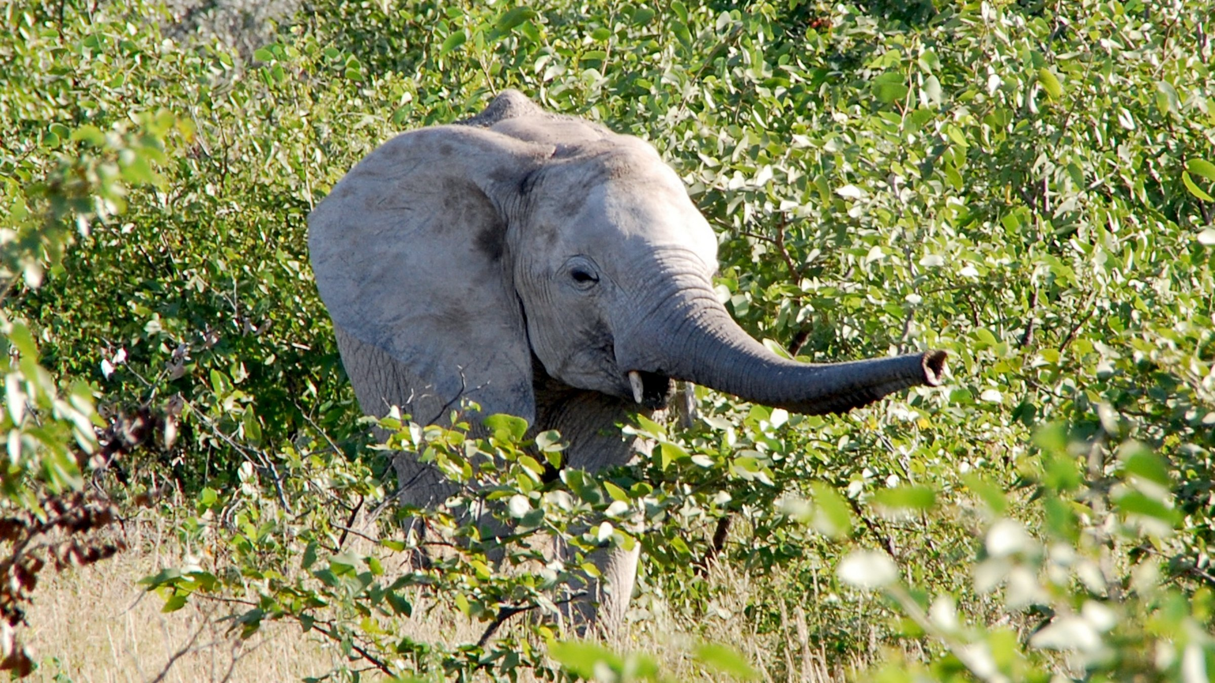 3-Day Etosha Getaway - Namibia Itinerary