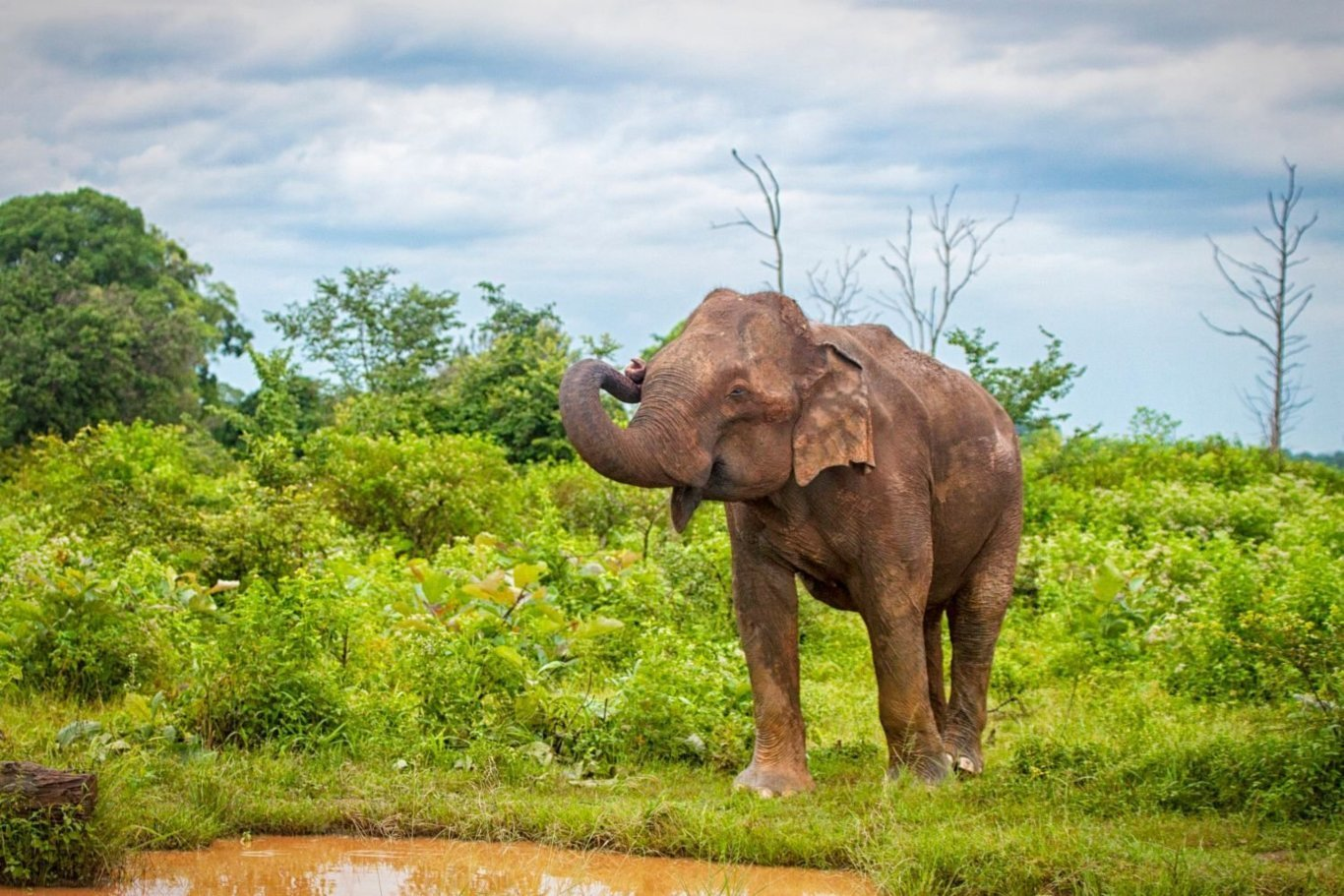 7-Day Big 5 Animal Exploration - Sri Lanka Itinerary