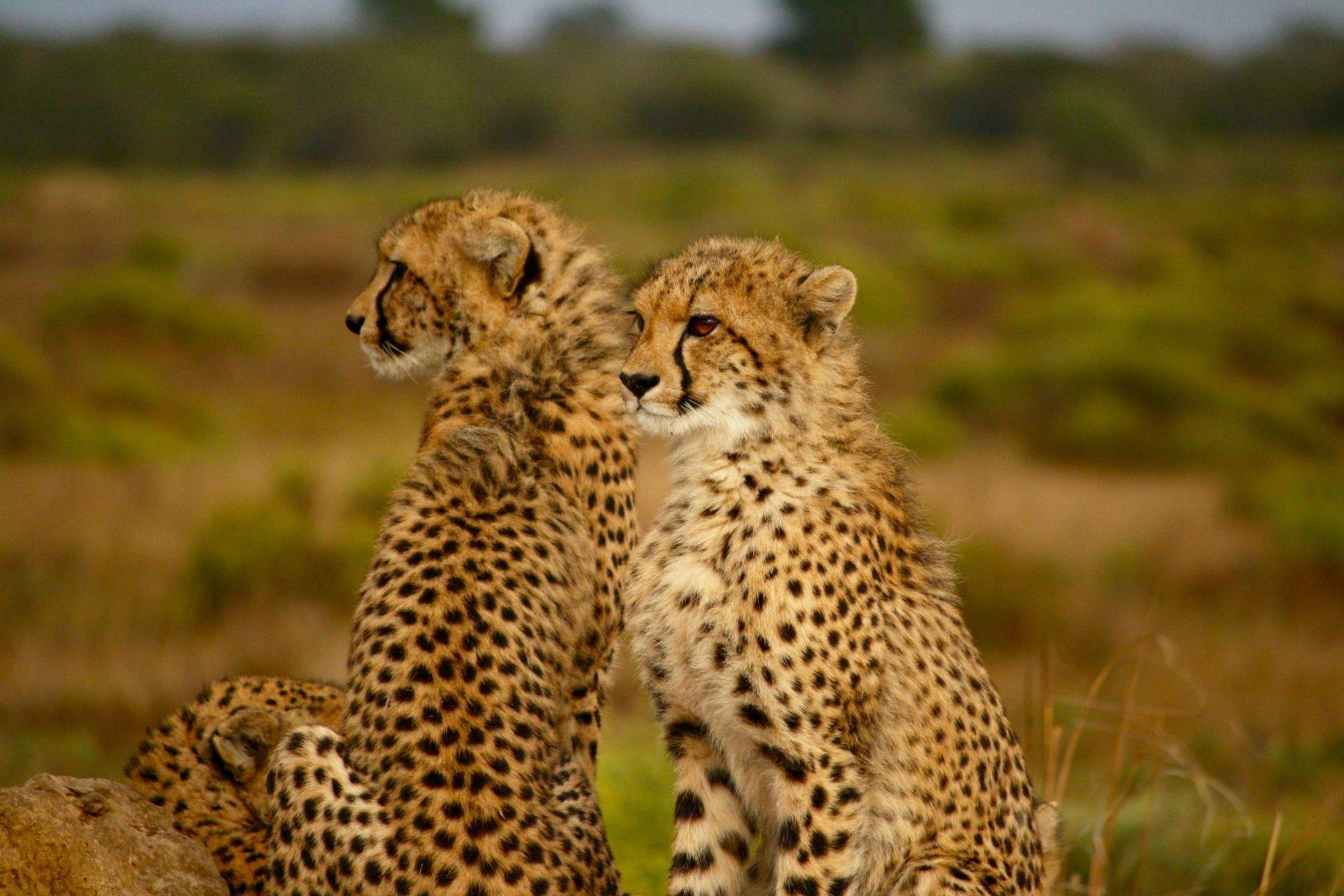 8-Day Cheetah and Big Cat Trails - Botswana Itinerary
