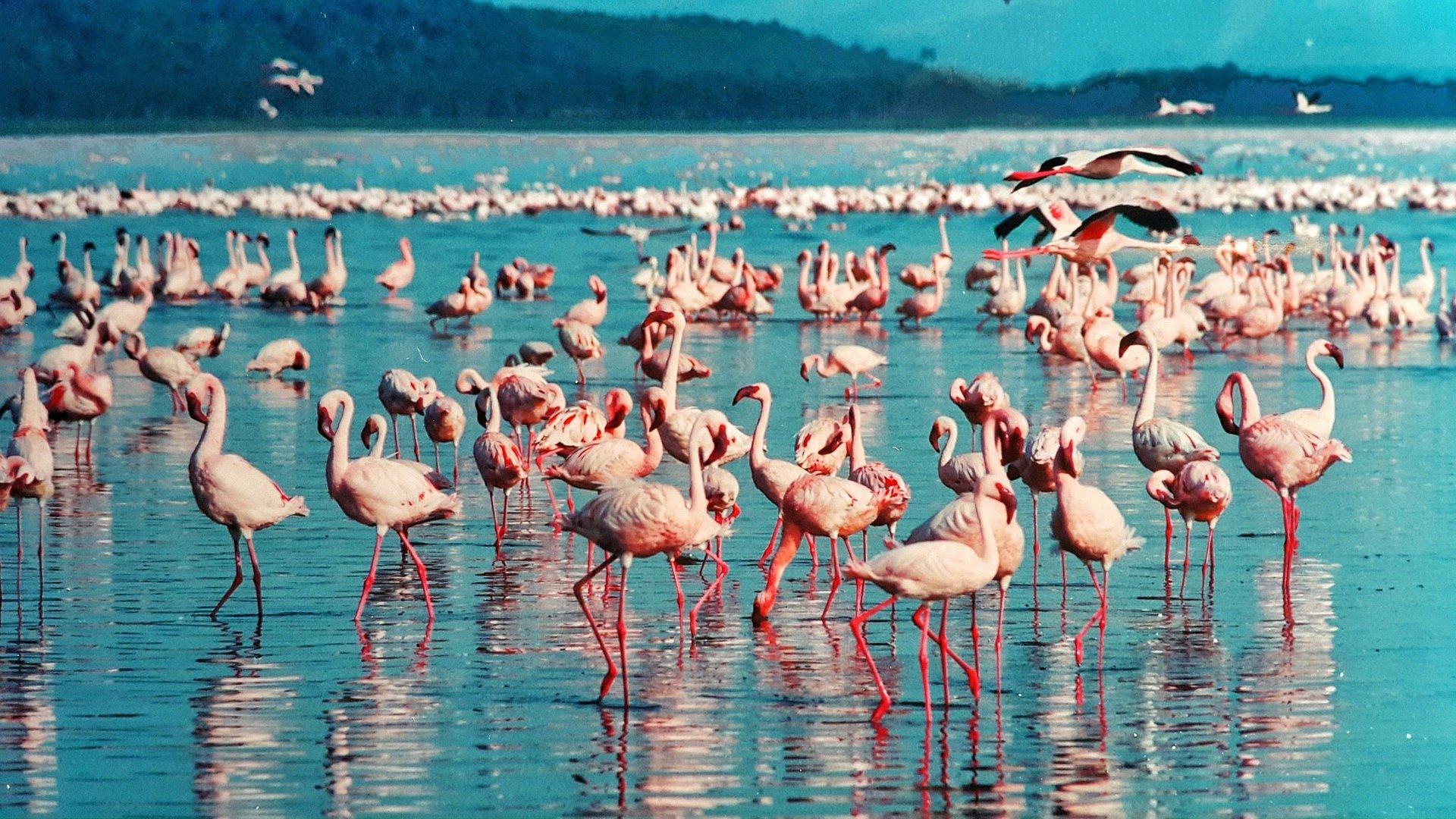 10-Day Kenya 'Out of Africa' Safari - Kenya Itinerary