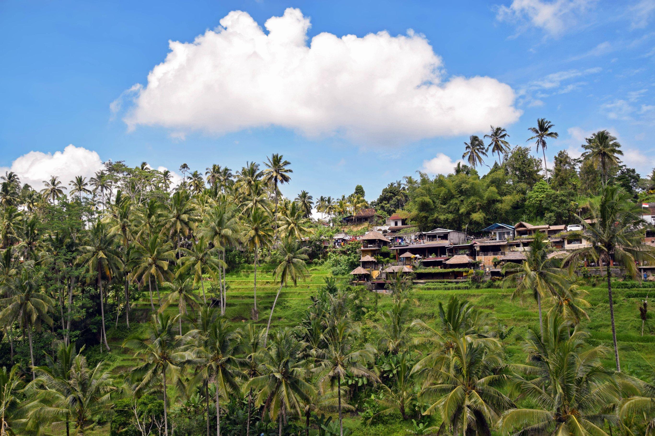 10-Day Discover Bali: Ubud, Nusa Lembongan & Seminyak Tour - Indonesia Itinerary
