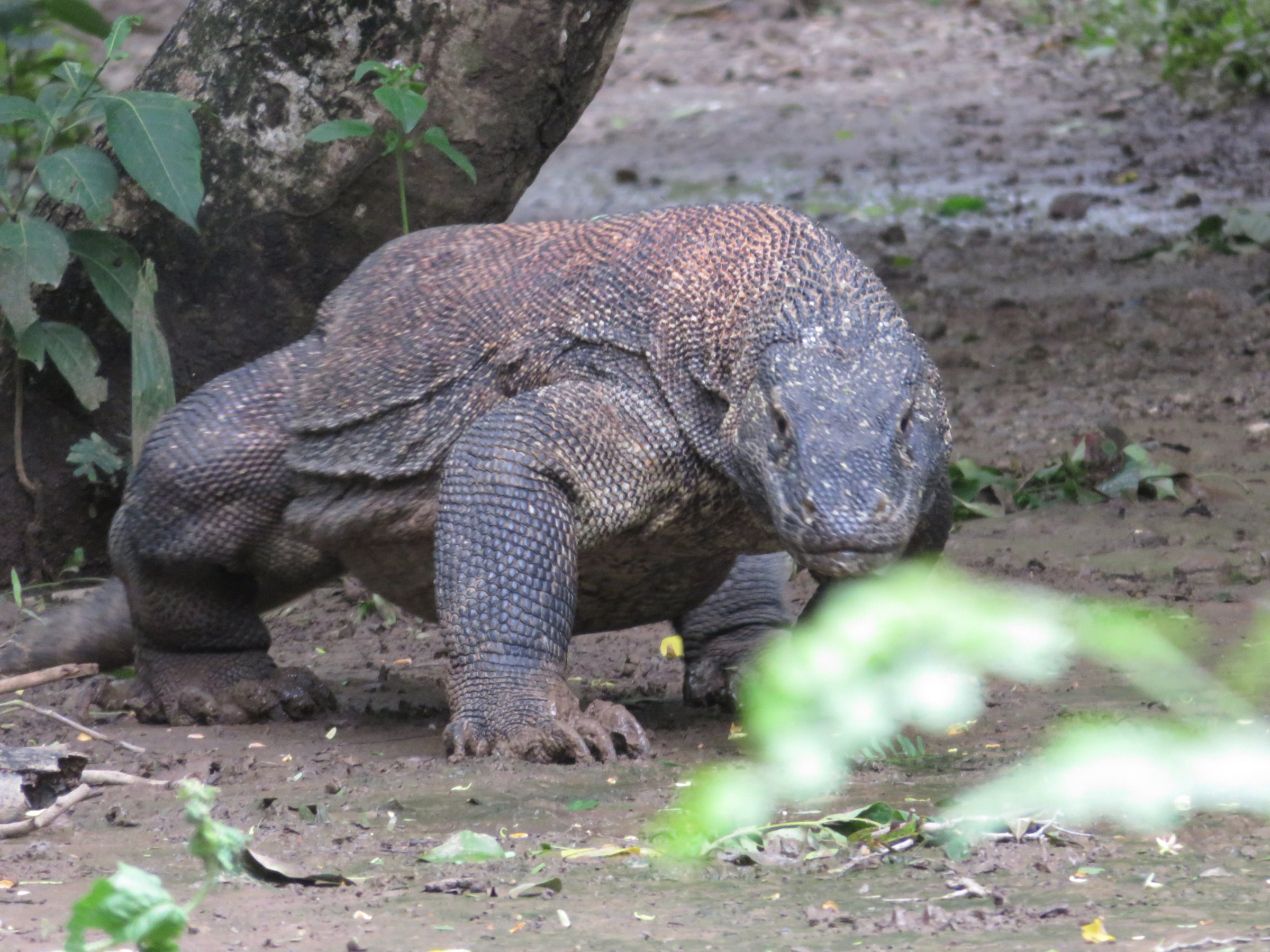 3-Day Discover the Komodo - Indonesia Itinerary