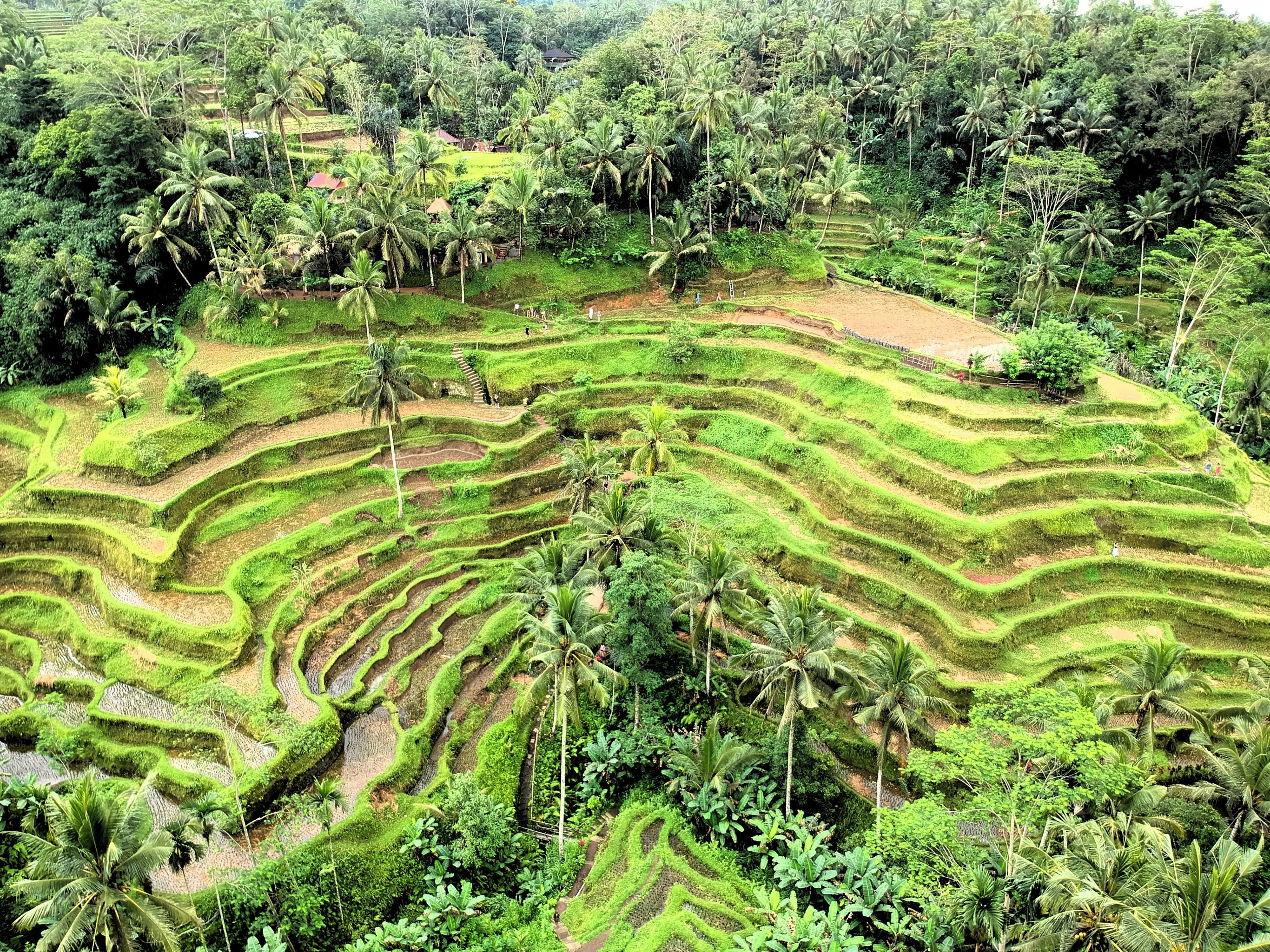 14-Day Java and Bali Grand Tour - Indonesia Itinerary