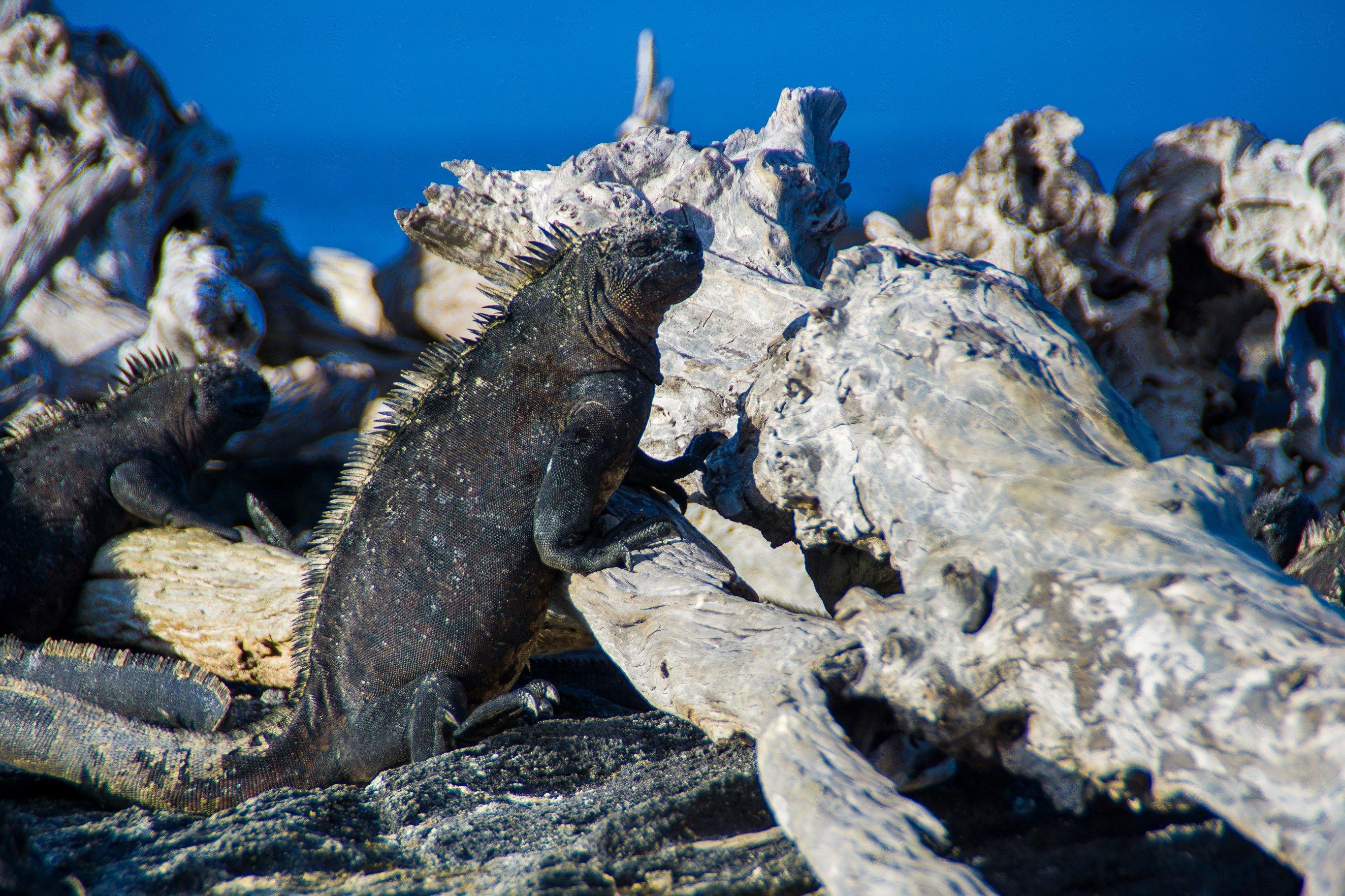 8-Day Galapagos Cruise Western Islands - Ecuador Itinerary