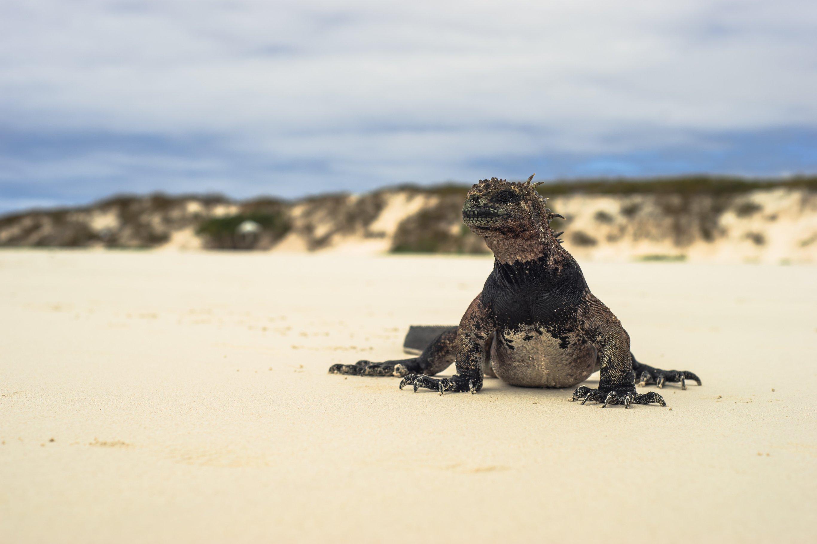 5-Day Galapagos Cruise Northern Islands - Ecuador Itinerary