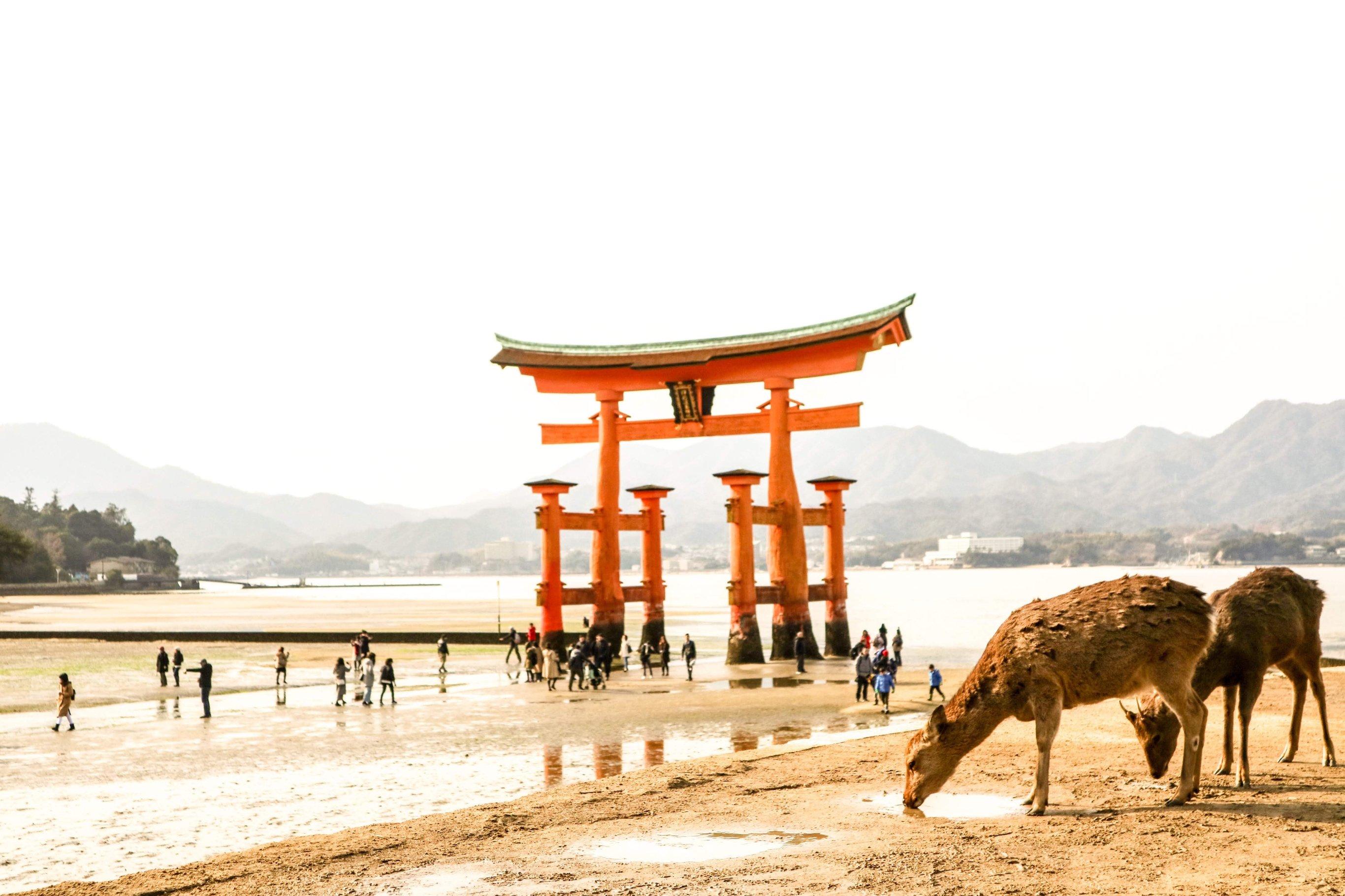 11-Day Best of Tokyo, Kyoto, & Mt Fuji - Japan Itinerary