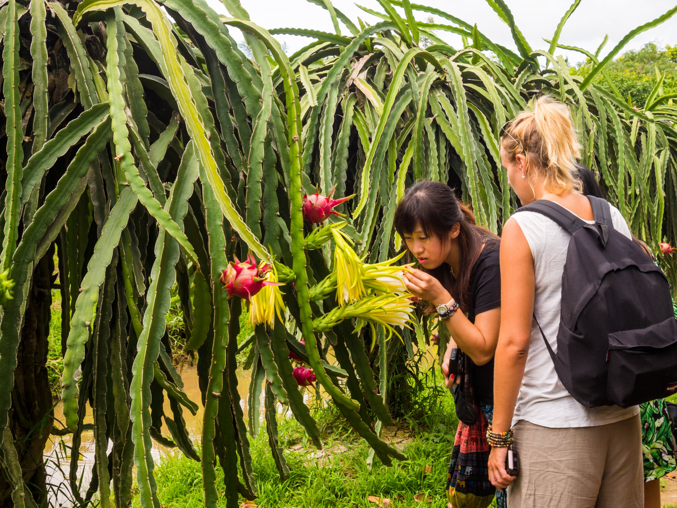 2-Day Ho Chi Minh City & Mekong Delta Tour - Vietnam Itinerary