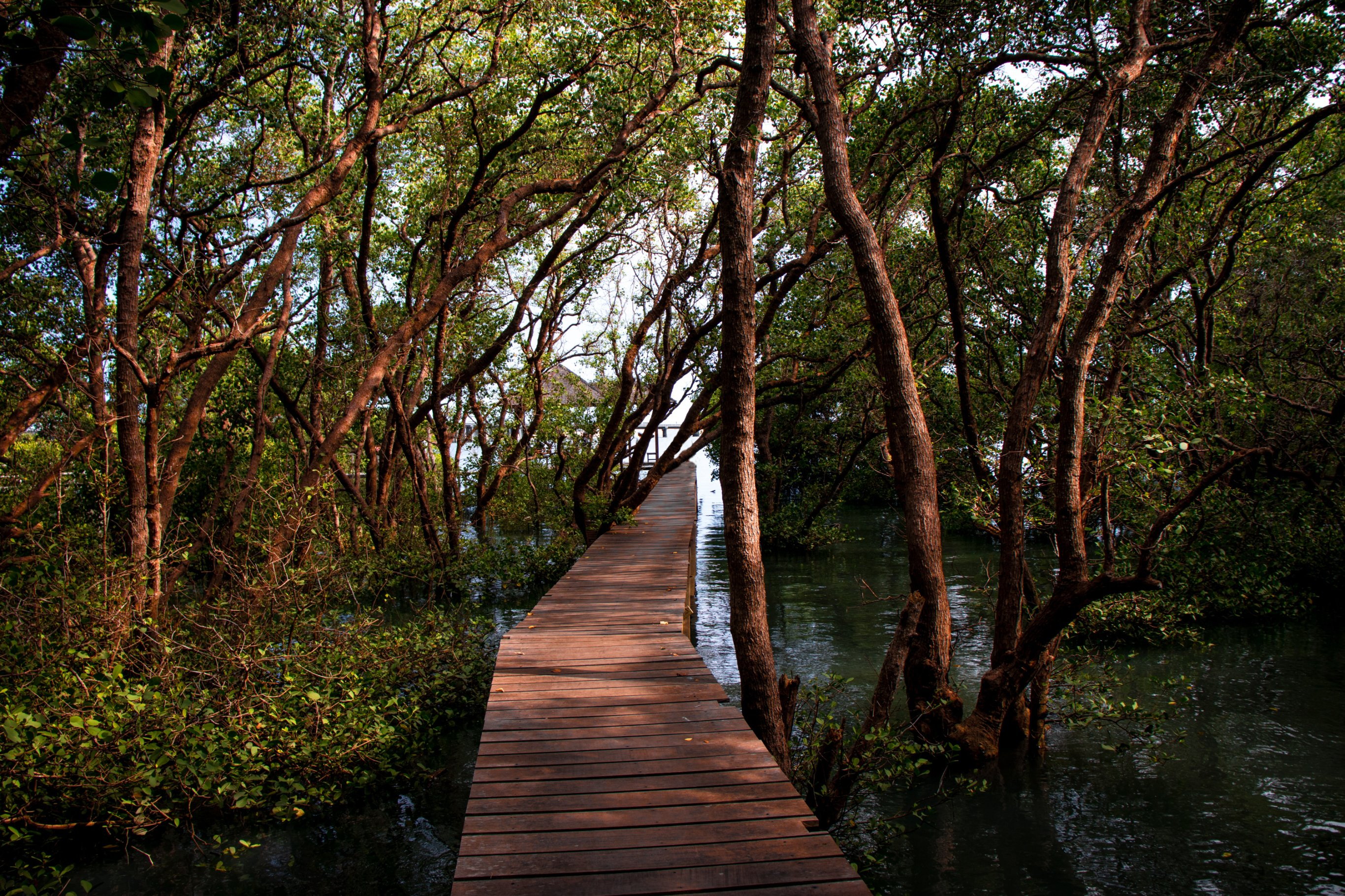 1-Day Can Gio Mangrove Forest & Vam Sat Eco Park - Vietnam Itinerary