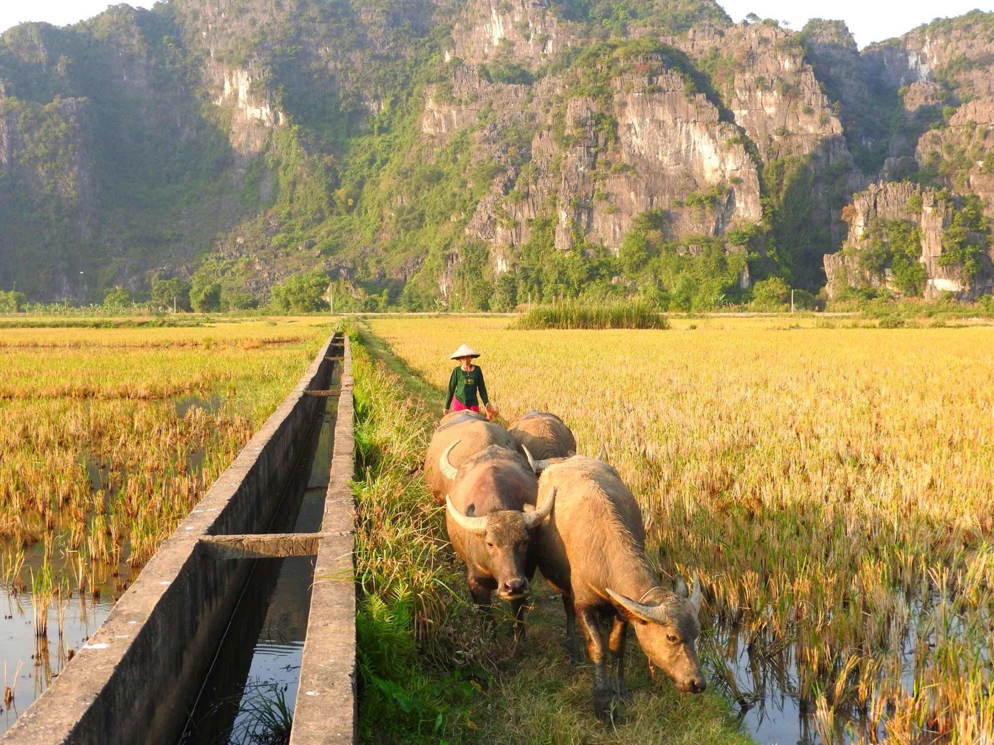 1-Day Ancient Capital of Ninh Binh - Vietnam Itinerary